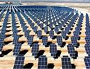 Nhật Bản khởi động dự án cánh đồng điện mặt trời